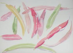 watercolor 53 GUM LEAVES