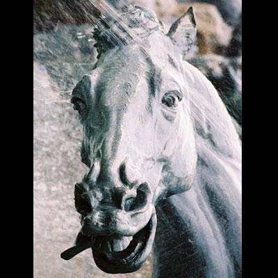 lochorse