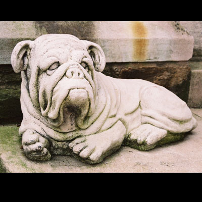 stalbansbulldog