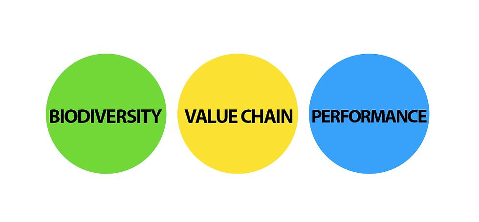 biodiversidade cadeia de valor1.png