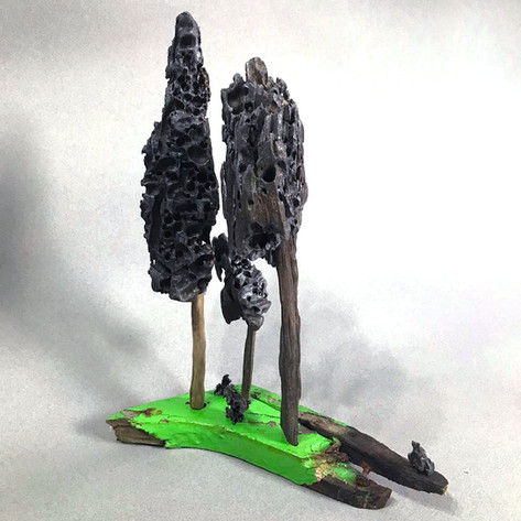 Morel driftwood on painted beach find