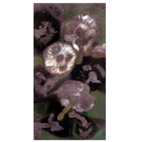 Fallen mushrooms