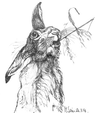 Hare in pen and ink