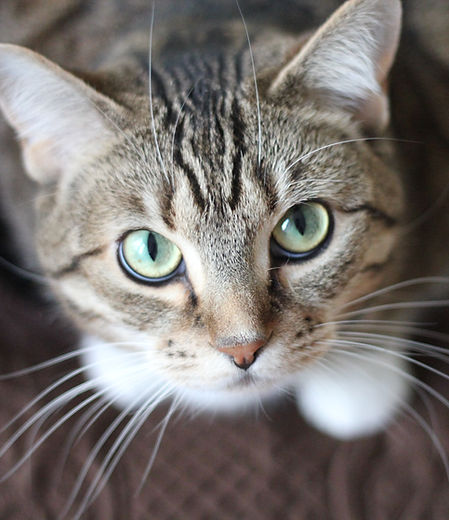 Cura Reconectiva para Animais
