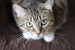 Grey tabby cat caring and compassion for animals