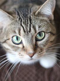 猫ちゃんプランを見る