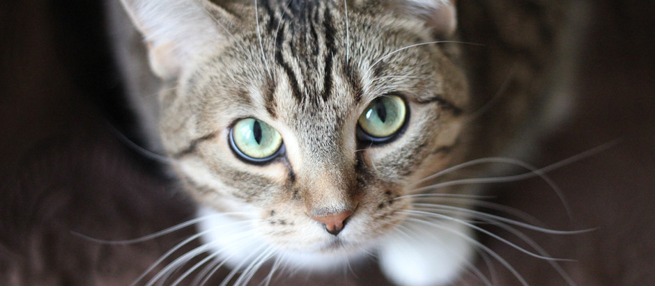 The Litter Box Escort - Does every pet sitter have one?