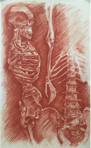 Skeletal_process_Final.png