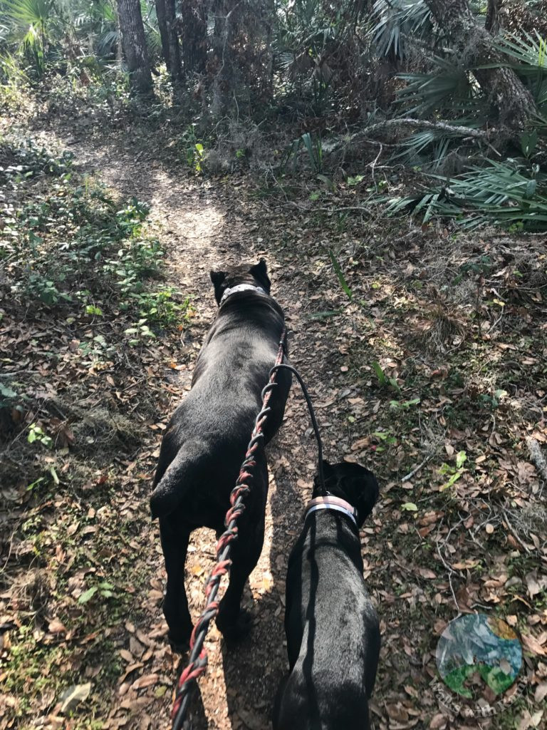 dogs on hiking trail