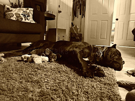 Sepia Saturday–Playing Catch Up