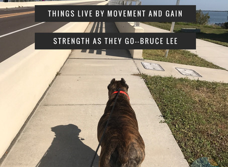 Movement, Wellness & An Urban Hike