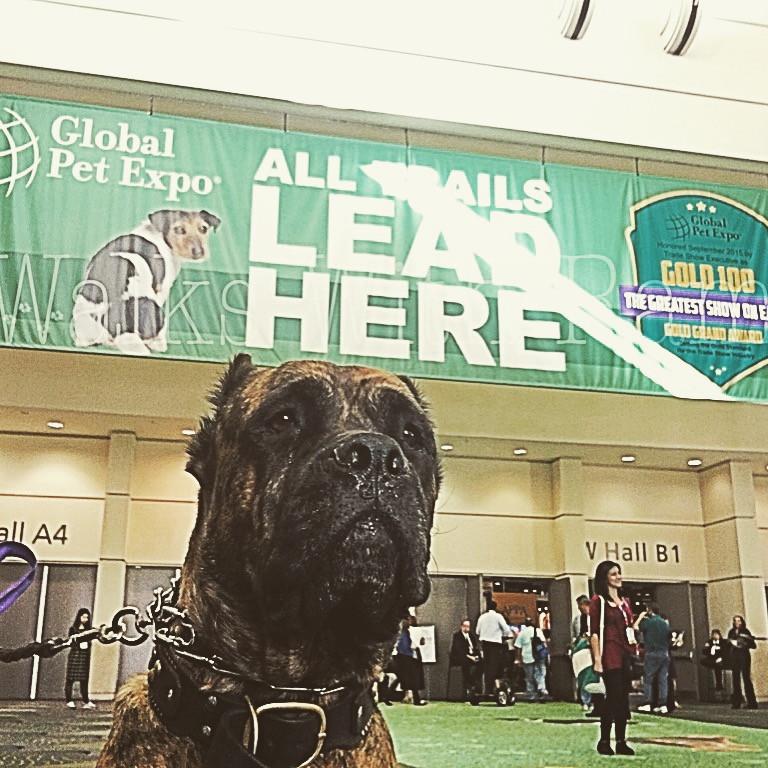 dog at Global Pet Expo