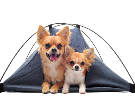 Pup's First Campout