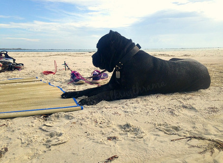 FitDog Friday–Our Coastal Hike