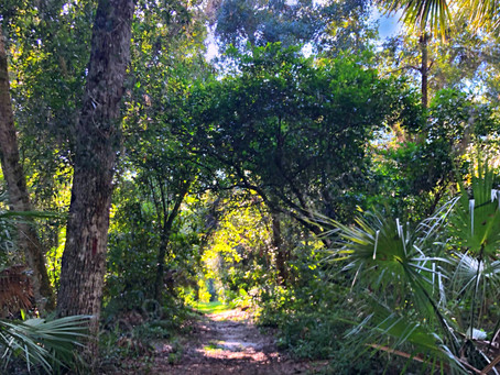 Enchanted Forest Sanctuary