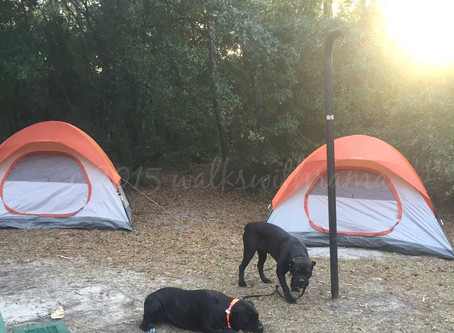 Trio-Hop Thursday–Our First Campout Of The Year