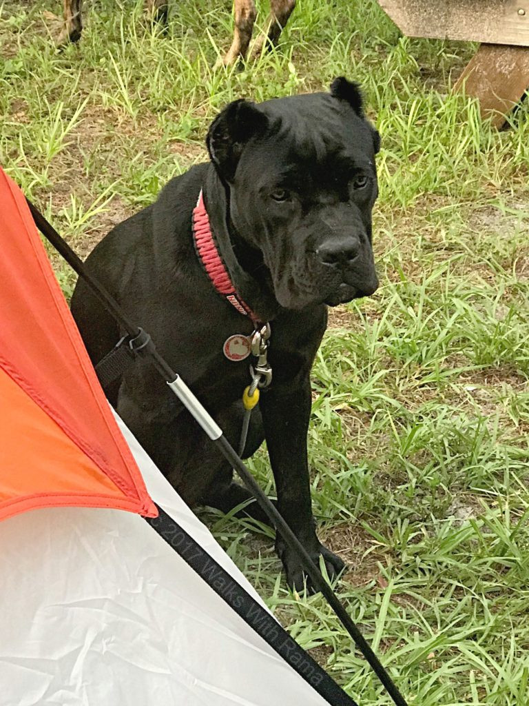 dog next to tent