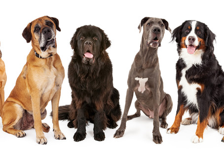 10 Irritating Situations Owners Of Large/Guarding Breeds Must Face