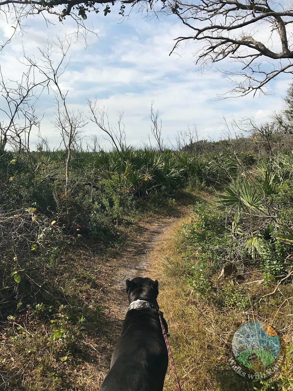 dog on hiking trail