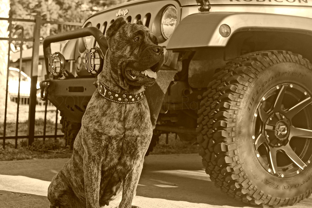 dog with Jeep