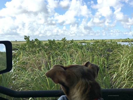 Jeeping Dogs & A Little Me Time