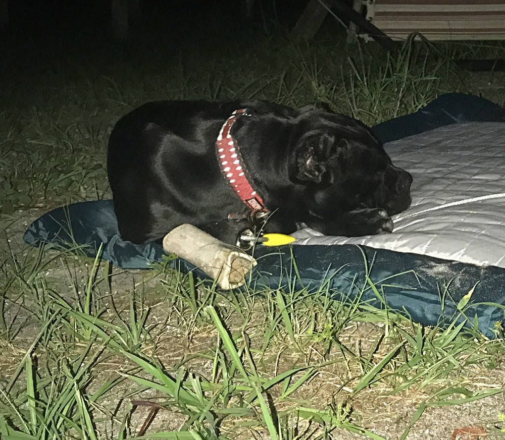 dog sleeping on bed outdoors