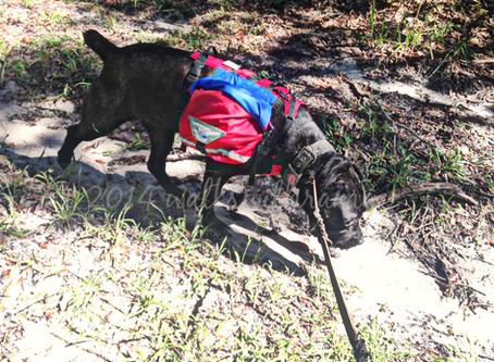 Tuesday Review–Groundbird Gear Dog Backpack