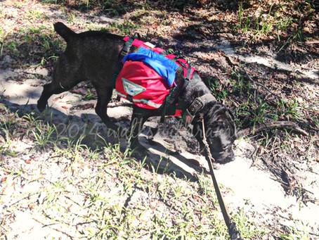 Tuesday Review–Groundbird Gear Dog Backpack