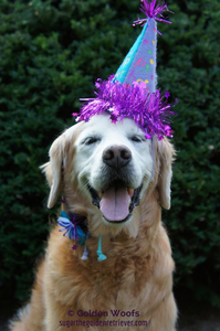 SUGAR_DOG13thBirthday