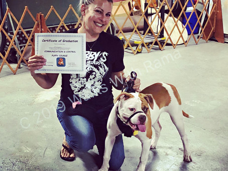 Raising An Adventure Dog–Post 3 Obedience