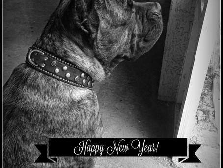 Wordless Wednesday-Looking Toward The New Year