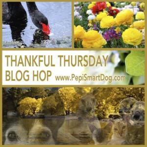 Thankful-Thursday-Wekly-Blog-Hop-Banner21-300x300