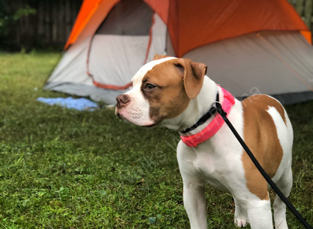 Raising An Adventure Dog Series–Post 1