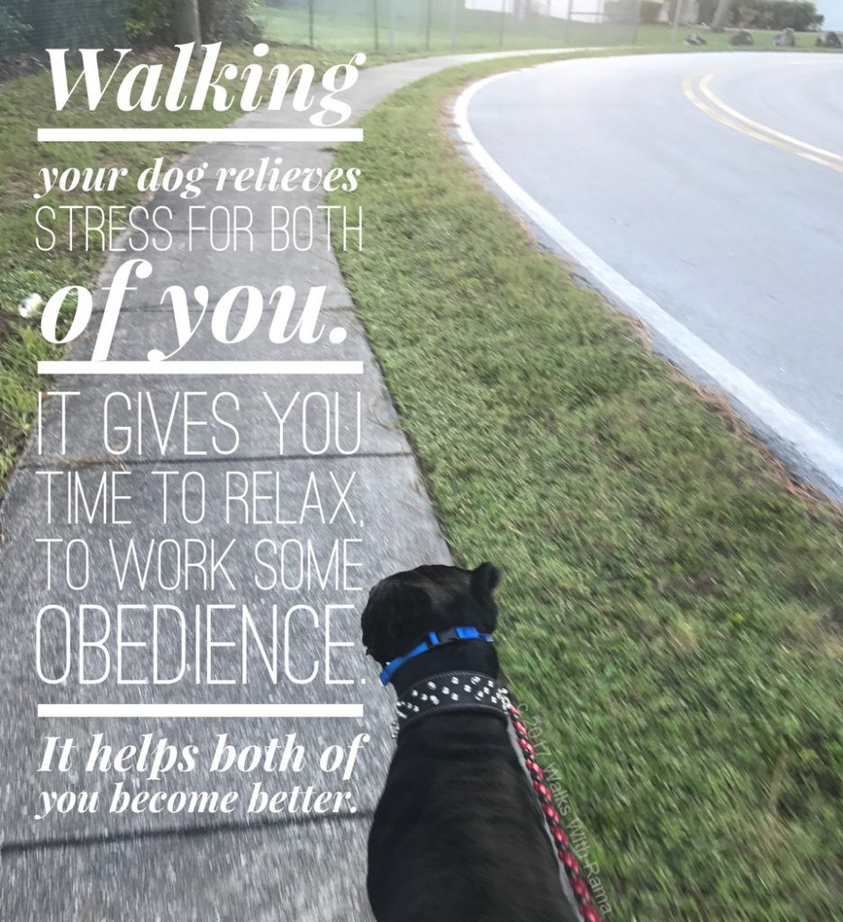 dog walking quote and photo