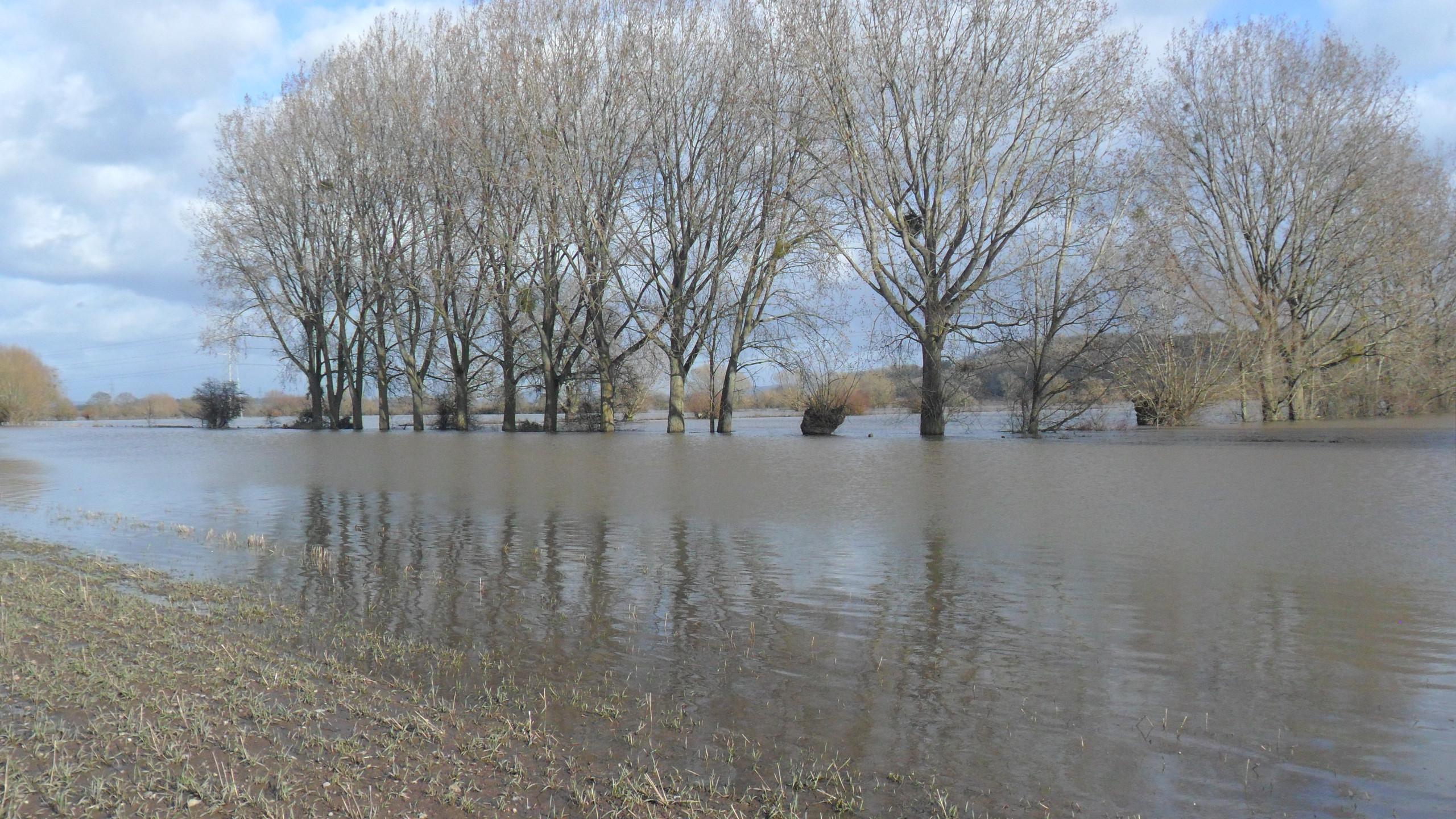 Flood Meadow Grassland