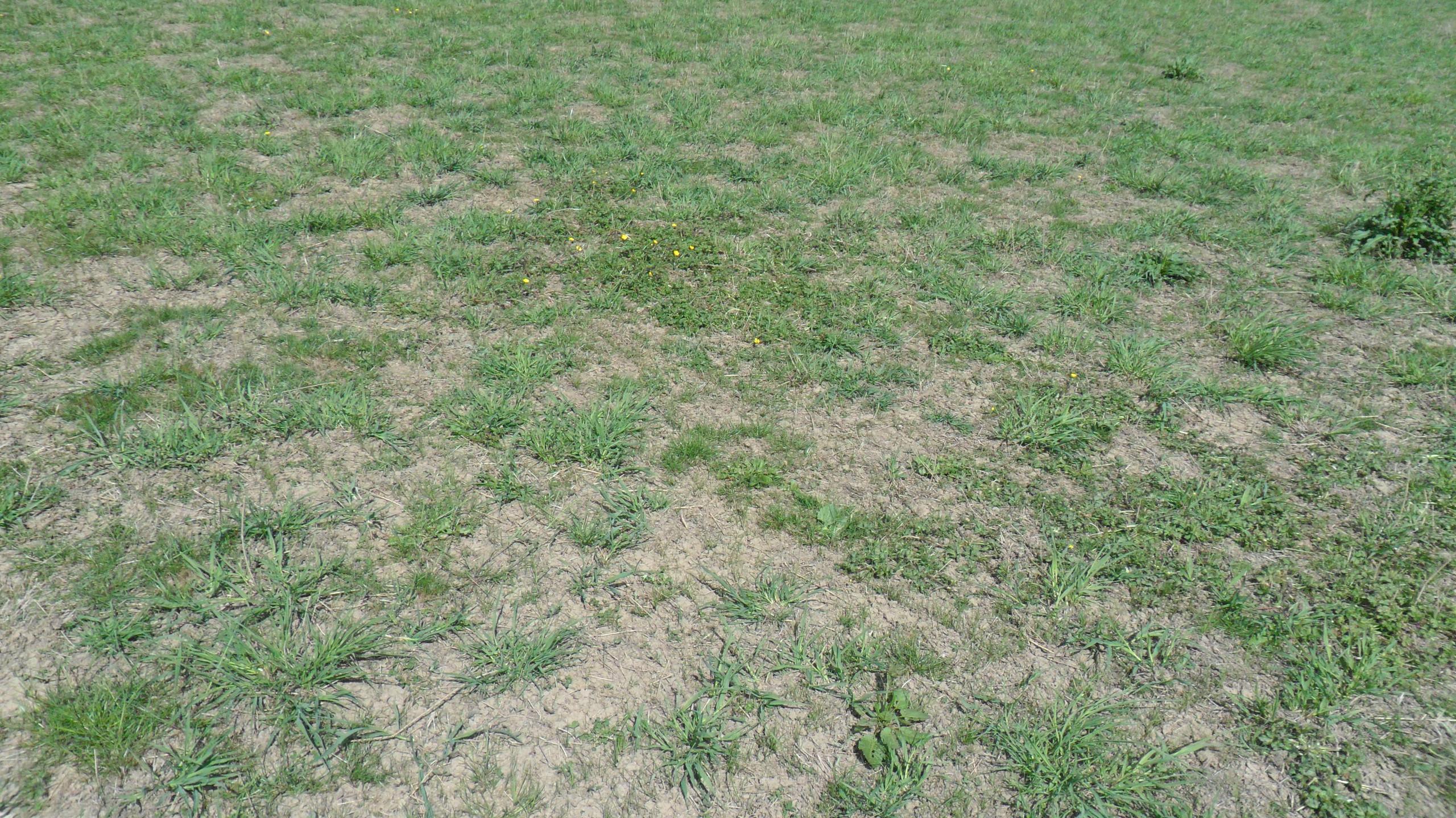 Grassland Flood Meadow 2020