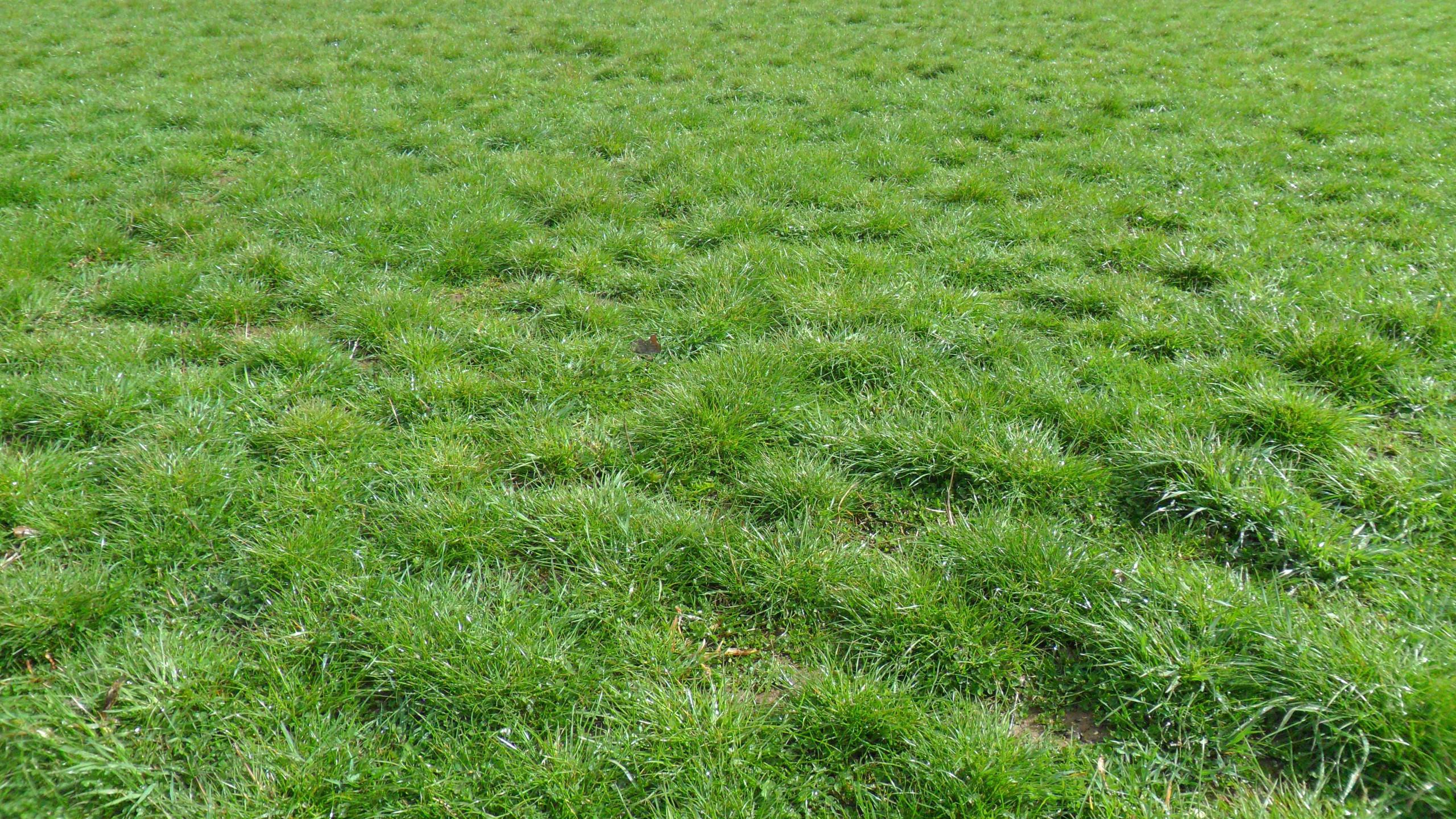 Grassland Flood Meadow 2019