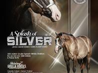 2018 A splash of silver stallion ad FINA