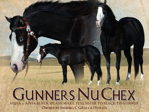 Gunners Nu Chex