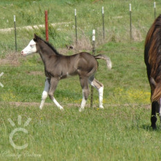 UNSERE 2020 FOALS