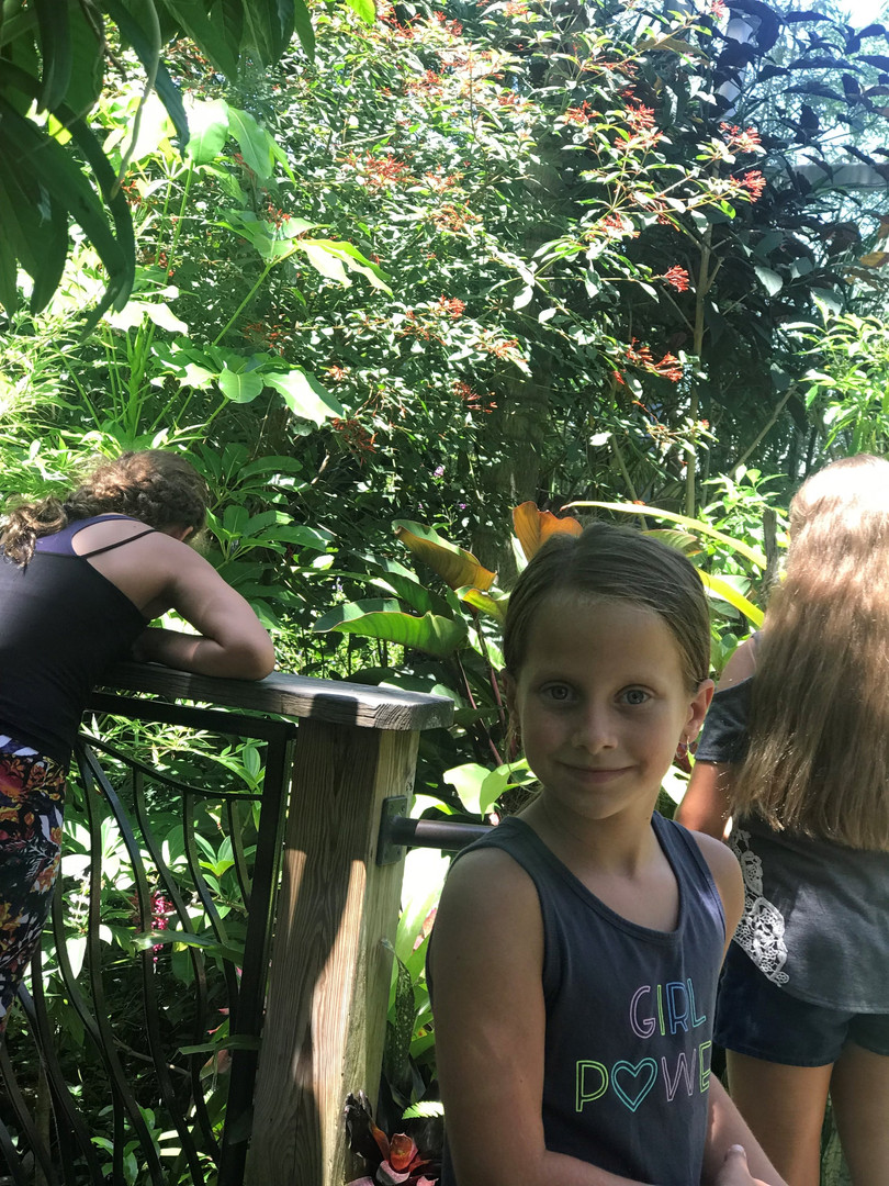 butterfly rainforest