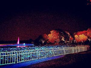 ナイトカガーデンin長居植物園__#長居植物園 #長居公園 #ナイトガーデン.j