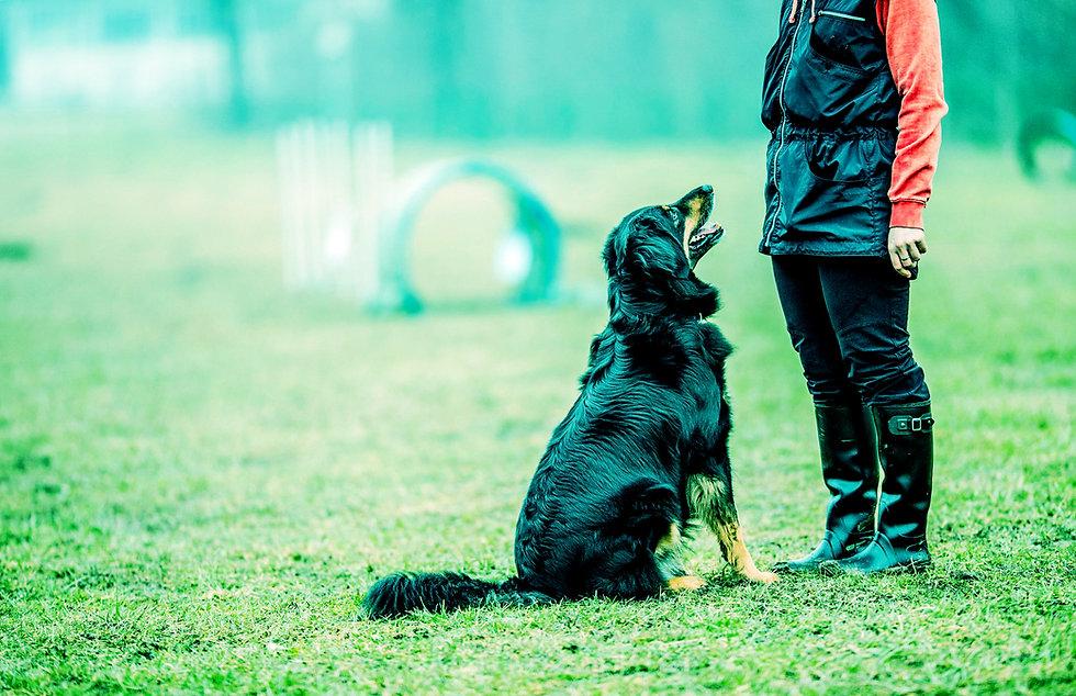 Useful-Dog_Training_Tips.jpg