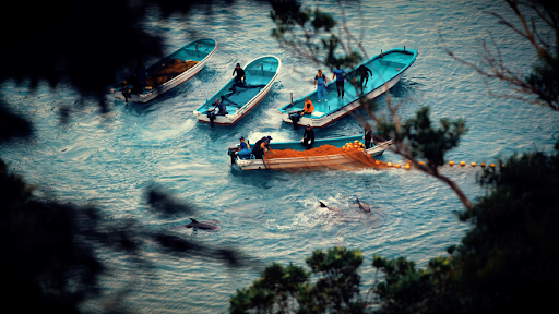 A still from Seaspiracy: A collection of fishing boats waiting for the dolphin hunt