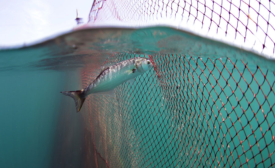 Still from Seaspiracy: A fish is swimming up to a net and gently touching it, the shot shows a glimpse of the fishing boat in the background