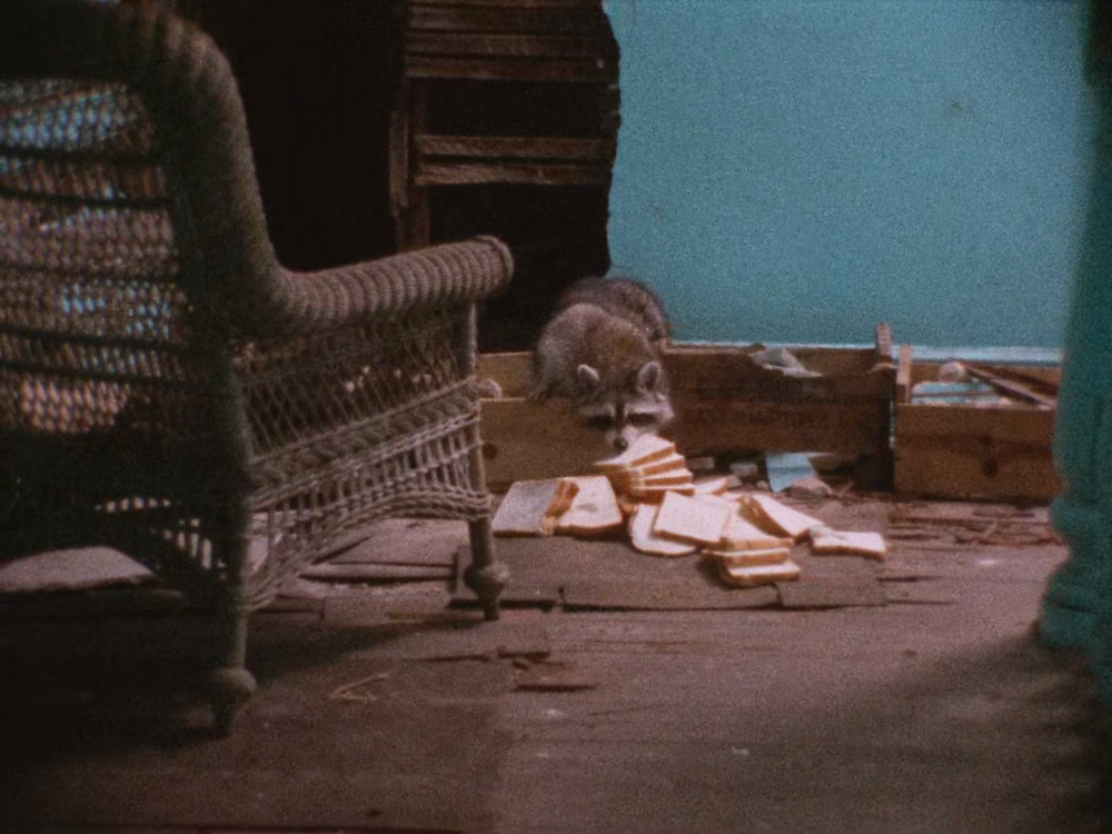 raccoon coming out of a hole in a blue wall, taking a slice of bread from collection on the floor infant of him. A woven chair is visible to the left, while cupboards full of miscellaneous items are scattered around