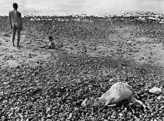 The photograph Ulysse, by Varda. A stony beach with a naked man facing away, with a naked child next to him. In the foreground, a dead goat lies on the ground, somewhat twisted.