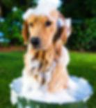 dog-bath.jpg