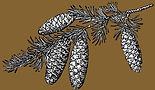 Pine%25252520cones_edited_edited_edited_