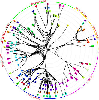 Map of the neuronal activation ramifications issuing from one single neuron